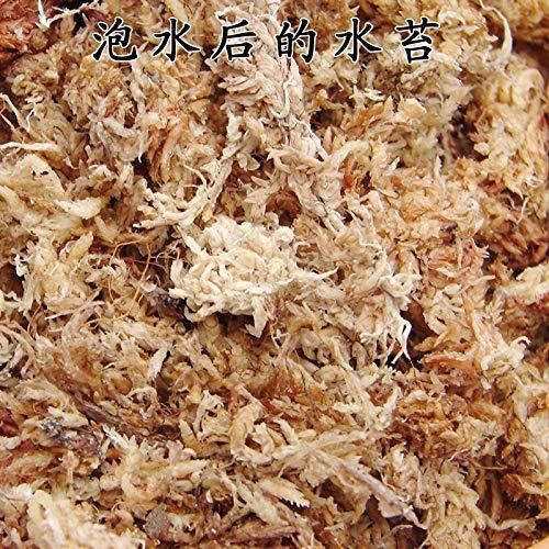 JRTAN&Pet Schildkröte Bodengrund Einstreu Substrat Free Schäumende Kokosnussmoos Schildkröte Winterschlaf Spinne Horn Froschmatte, Moos 100g -