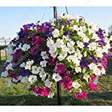 200pcs colgantes petunia Semillas Semillas Melissa original de la flor flores perennes para jardín Bonsai crisol de estableci
