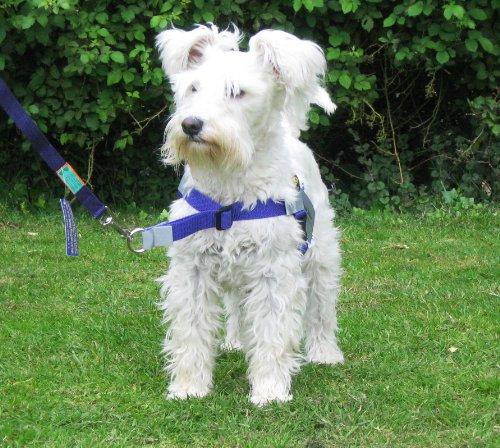 Arnés antitirones Arnés con sujeción frontal para perros de entre 5,4y10,4kg. Tamaño de la cincha: 38x53cm. Color morado.