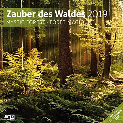 Zauber des Waldes 2019 Broschürenkalender por Ackermann Kunstverlag