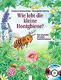 Wie lebt die kleine Honigbiene