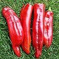 10 Samen Marconi rot Paprika – Italienische Sorte, fruchtig aromatisch von Samenfritze auf Du und dein Garten