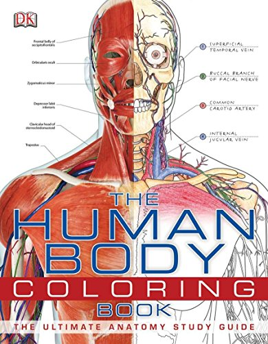 The Human Body Coloring Book: The Ultimate Anatomy Study Guide por Dk