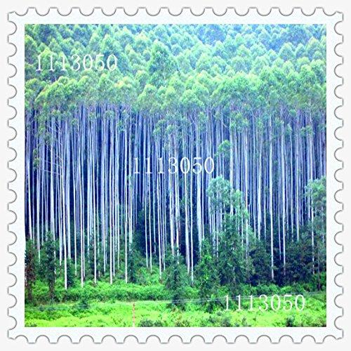 2016-nuevas-semillas-de-eucalipto-jardin-de-plantas-bonsai-semillas-50pcs-variedades-de-semillas-de-