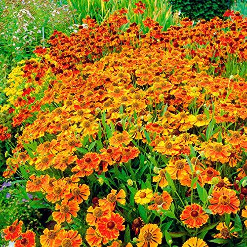 Winterhart Garten -