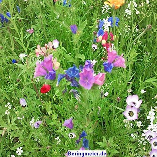 Veitshöchheimer Bienenweide - Bienenwiese Blumenwiese für ca. 30-50m²