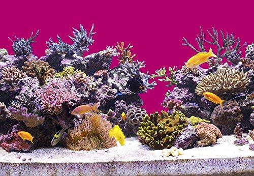 (100 cm Aquarium Hintergrund Folie pink 70 cm breite / höhe)