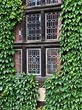 Parthenocissus quinquefolia. Selbstklimmende Jungfernrebe. Wilder Wein. 9cm Topf. 3 Pflanzen - zu dem Artikel bekommen Sie gratis ein Paar Handschuhe für die Gartenarbeit dazu