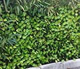 PEGANE Haie Artificielle Feuilles de Rosier Coloris Vert Tendre, 1,50m x 3m