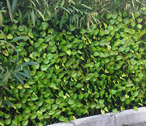 Haie artificielle feuilles de Rosier coloris vert tendre, 1,50m x 3m -PEGANE-