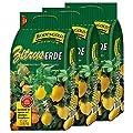 3 Sack Zitruserde Bodengold á 15 L = 45 Liter Spezialerde für Zitrusfrüchte von Bodengold bei Du und dein Garten