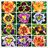 100 Samen / Lot Hybrid Taglilie Blumen Samen Hemerocallis Lily Indoor Bonsai Home Garten Supplies