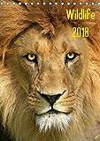 Wildlife 2018 (Tischkalender 2018 DIN A5 hoch): Wildlife-Fotografie (Monatskalender, 14 Seiten ) (CALVENDO Tiere) [Kalender] [Apr 01, 2017] Klingebiel, Jens