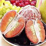 PLAT FIRM GERMINATIONSAMEN: 10 Samen: Pomelo 10,25,50Frische tropische exotische Pomelo-Baum- / Pflanzen- / Fruchtsamen aus Thailand