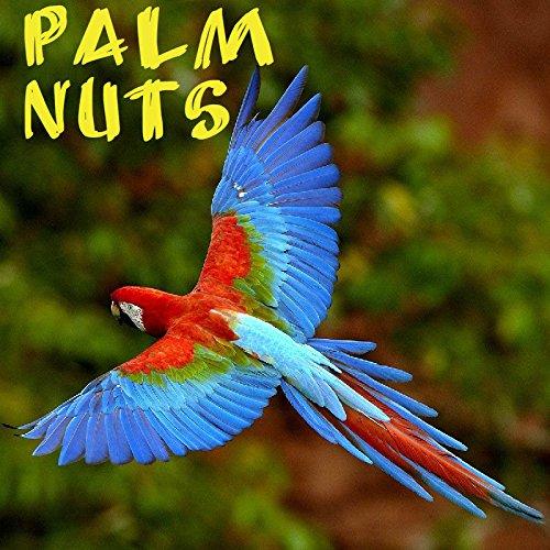 PALM NUTS ~ Wodyetia bifurcata 85 BIG PARROT MACAW BIO frische Samen BEHANDELT