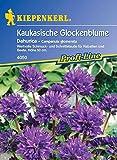 Kiepenkerl Campanula glomerata (Kaukasische Glockenblume) 0-0cm / 1 Packung (Blumenzwiebeln, Sommerblüher (Aussaat im...