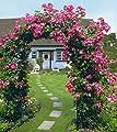 Rosenbogen Classic 150 x 45 x 255 cm von Ing. G. Beckmann KG auf Du und dein Garten
