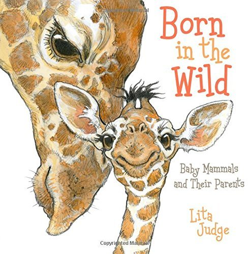 Born in the Wild: Baby Mammals and Their Parents by Lita Judge (2014-10-21)
