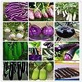700PC weltweit umfassendste Vier Arten von Gemüse und Obst Samen. (RADISH, Auberginen, Paprika, Tomatensamen) Bunte Garten von SVI auf Du und dein Garten