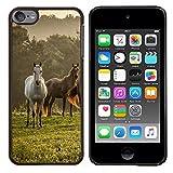 STPlus Weißes graues Pferd Tier Harte Hülle Tasche Schutzhülle für Apple iPod Touch 6