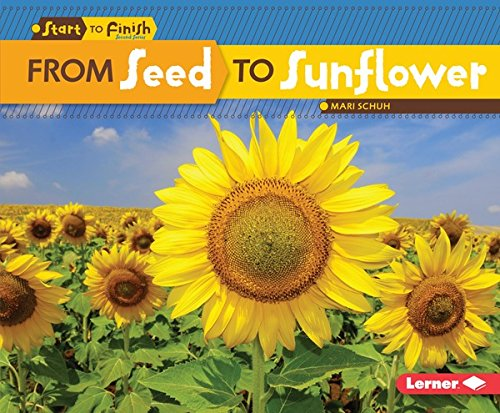 from-seed-to-sunflower-start-to-finish-second-series