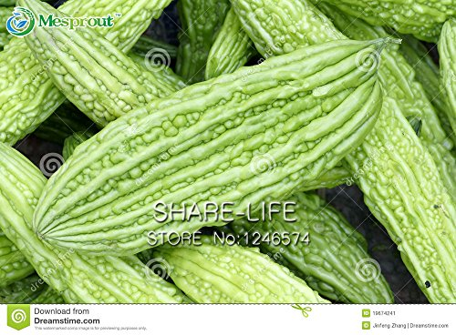 10PCS / PACK Balsambirne Seed bitterer Kürbis-Samen Bitter Melon Momordica Charantia Gemüse-Samen