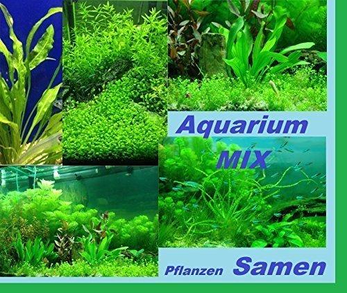 30x Aquarium Pflanzen Samen Mix Leichte Aussaat Neu 2016 Neue Sorte Samen Seltene Pflanze Rarität selten #206