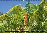 Botanischer Garten Palermo (Wandkalender 2018 DIN A2 quer): Eine Reise durch eine exotische und fremde Pflanzenwelt in einem der schönsten Botanischen ... [Kalender] [Apr 15, 2017] Balistreri, Ricarda - Ricarda Balistreri
