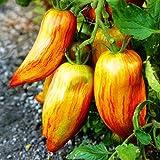 Cioler Seed House - 100 pièces de graines de tomates géantes biologiques Viande Graines de tomates Légumes Fruits Graines Vivaces à haut rendement vivaces pour balcon/terrasse
