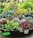 BALDUR-Garten Winterharte Sedum-Mischung Fetthennen Hauswurz Stauden Sortiment, 6 Pflanzen mehrjährig