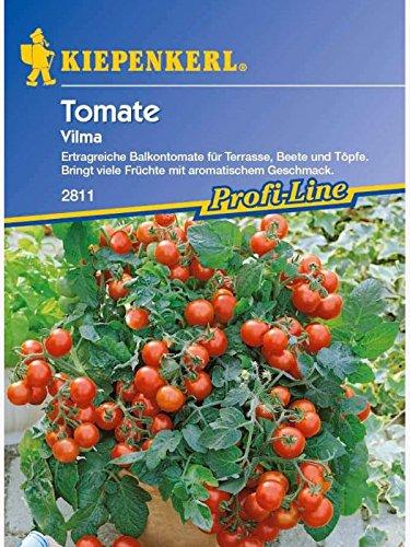 Tomaten Balkontomate Vilma rot