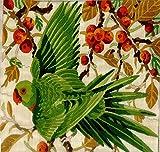 #6: Anchor Stitch Kit-Parakeet