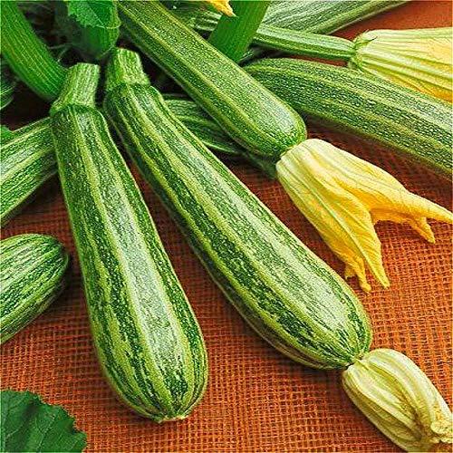 Shopmeeko 20 Stück Honig Kürbis Pflanzen Köstliche und Nicht-GVO-Gemüse Pflanzen Pflanzen Garten Bio-Pflanzen Pflanzen einfach zu pflanzen 2017 Sa: Klar - Bio-klaren Honig