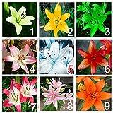 9 Farben 450 Parfüm Lilien-Samen (50 Samen je Farbe) ist dies nicht Lilie Blumenzwiebeln, Lilie