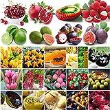 Go Garden 30Pcs Kaffernlimette Samen: Garten Verschiedene Heirloom Gemüse, Obst, Samen Nicht-GVO-essbaren Samen Ökologischer Pflanzenbau