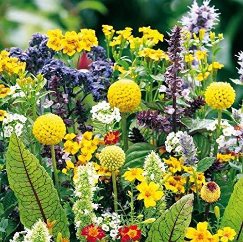 Qulista Samenhaus - 50pcs Wildblumen Saatgut Mischung Großer Staudengarten mix Staudenbeet Schmetterlings-Kollektion bienenfreundlich Blumensamen winterhart mehrjährig