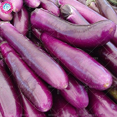 11.11 Big Promotion! 100 pcs / lot géant graines d'aubergine violet jardin graine légume vert et maison plante herbe organique 2