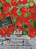 Wicke SP. Überriesen, leuchtendscharlach von Sperli-Samen