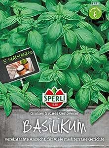 Sperli-Samen Basilikum Genoveser 5 Saatscheiben
