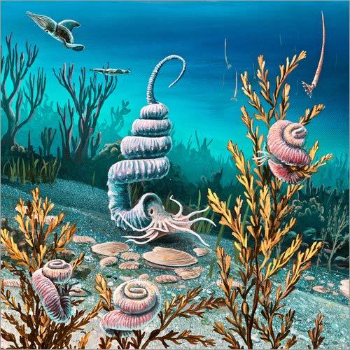 Posterlounge Alu Dibond 50 x 50 cm: Kreideartige heteromorphe Ammoniten von Richard Bizley/Science Photo Library