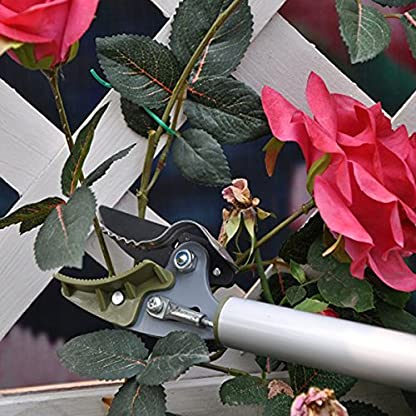 Bureze Tijeras de podar telescópicas con Mango Alto para árbol de Frutas, podadora de jardín