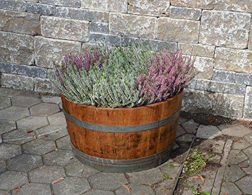 Gartenbambus Pflanzabstand ca. 40 - 50 cm
