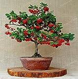 Bloom Green Co. Nuovo arrivo Fagioli Pianta del caffè Arabica Bonsai Kadi Mu caffè bonsai qualità High Yield Specie Per Garden 10pz