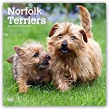 Norfolk Terriers 2019 Calendar