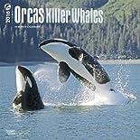 Orcas 2016 - Killerwale - 18-Monatskalender: Original BrownTrout-Kalender  (Wall-Kalender) hier kaufen