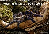 Vogelspinnen - Tarantulas (Wandkalender 2019 DIN A3 quer): Fotokalender mit Vogelspinnen aus aller Welt (Monatskalender, 14 Seiten ) (CALVENDO Tiere)