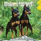 Miniature Pinschers - Zwergpinscher 2018-18-Monatskalender mit freier DogDays-App: Original BrownTrout-Kalender [Mehrsprachig] [Kalender] (Wall-Kalender)