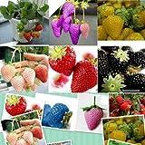 1500 15 Tipos de semillas Las semillas de la fresa Negro, blanco, amarillo, azul, rojo, gigantes, Orange, pruple, nave libre jardín planta verde de la fruta