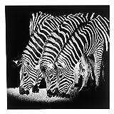 Mojawo® Leinwandbild Zebras mit Glitzer Kunstdruck gerahmt Wandbild Poster Zebrabild Leinwand Zebra Bild 50x50x2cm