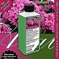 GREEN24 Zimmer-Azaleen Dünger, Premium Flüssigdünger aus der Profi Linie von GREEN24 auf Du und dein Garten